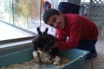 נעם מאושר עם סופי הארנבת